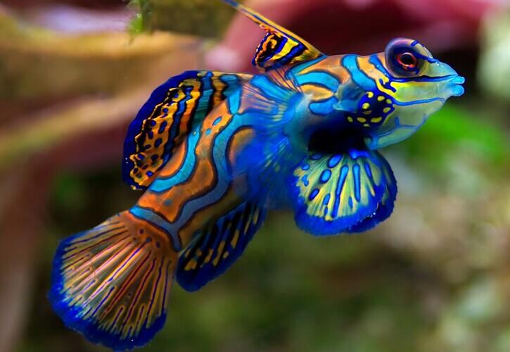 Ихтиологи назвали самую красивую рыбу. 14161.jpeg