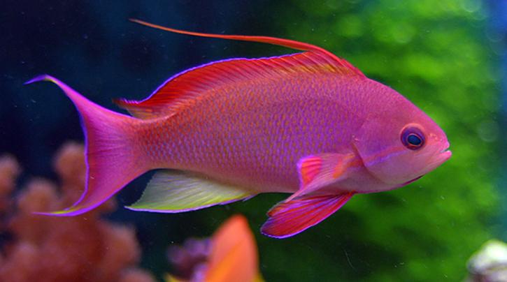 Ихтиологи назвали самую красивую рыбу. 14162.jpeg