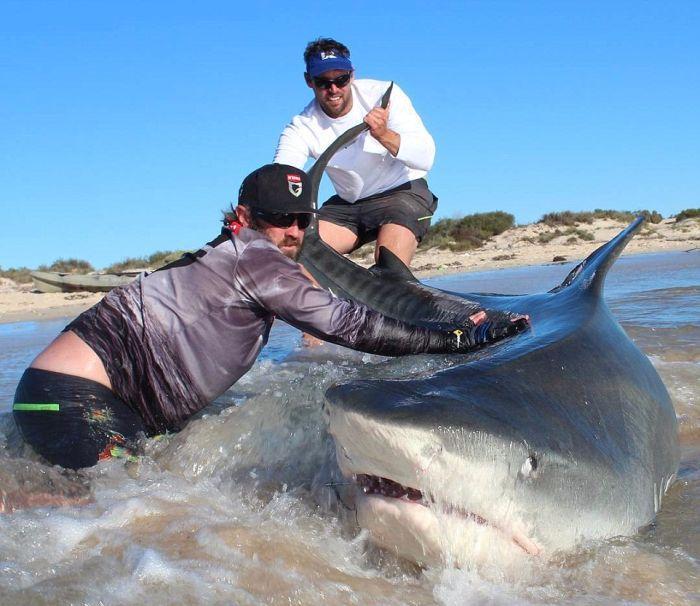 В Австралии на удочку поймали акулу. акула
