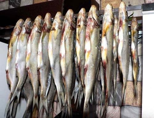 Защита от мух при вялении рыбы 0