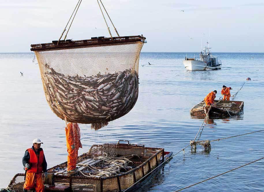 В Астрахани наградили лучших работников рыбной промышленности. 16172.jpeg