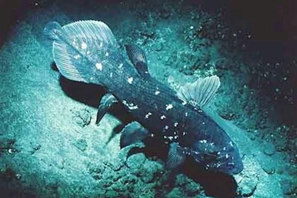 История одной «вымершей» рыбы. 14182.jpeg