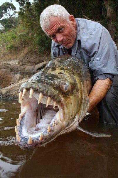 Топ 10 самых опасных рыб в мире . 10 САМЫХ ОПАСНЫХ РЫБ В МИРЕ 5