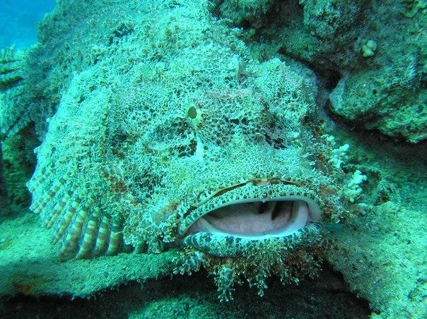 Топ 10 самых опасных рыб в мире . 10 САМЫХ ОПАСНЫХ РЫБ В МИРЕ 6