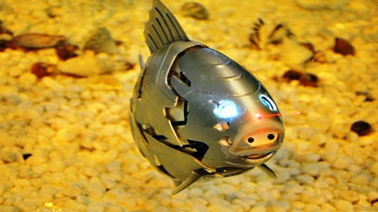 Ученые научились манипулировать поведением рыб. робот