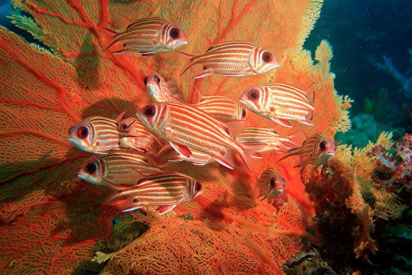 Тайна цветовых окрасок и узоров рифовой рыбы раскрыта. 14208.jpeg