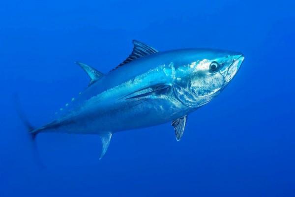 Рыба, балансирующая на грани исчезновения. 14212.jpeg