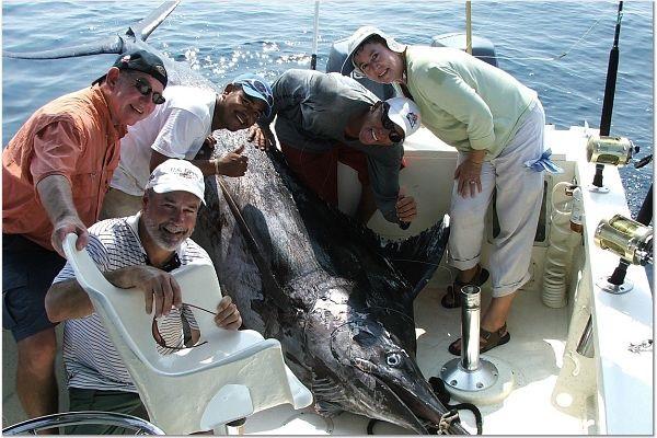 На Барьерном рифе поймали гигантского марлина. 14219.jpeg