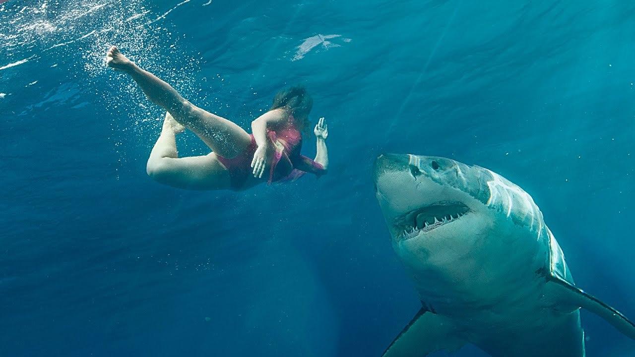 В Австралии акула напала на рыбака. акула