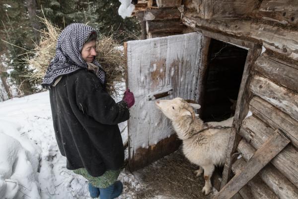 Отшельнице Агафье подарили щенка. 14223.jpeg