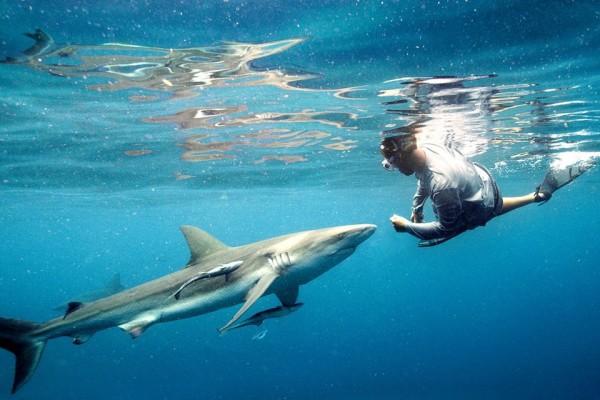 Во Флориде предлагают запретить охоту на акул. 14226.jpeg