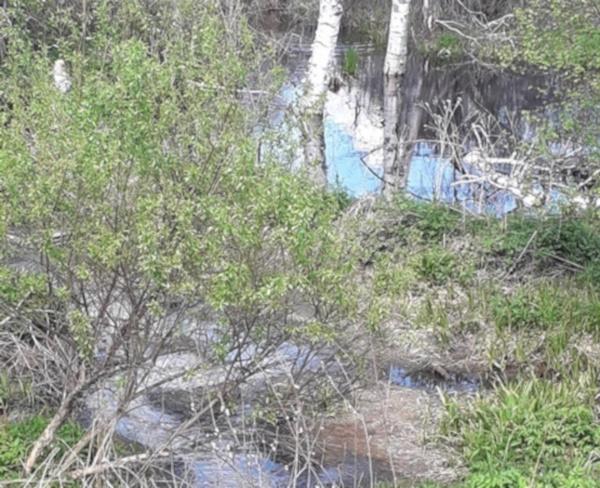 ВТюменском районе канализационными стоками «убили» реку: вымерла рыба, исчезли птицы. рыба, птицы, река, экология, Тюменская область