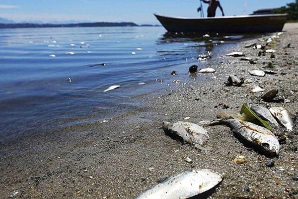 В реках обнаружили мертвую воду. 14240.jpeg