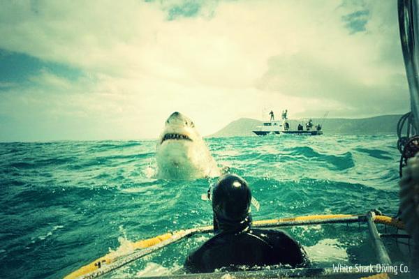 Соревнования по ловле акул ведут к их вымиранию. 14242.jpeg