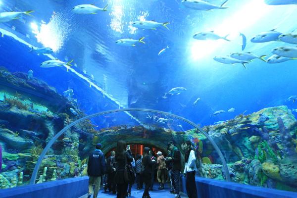 В Китае открылся первый в мире аквариум в горах. аквариум, горы, Китай