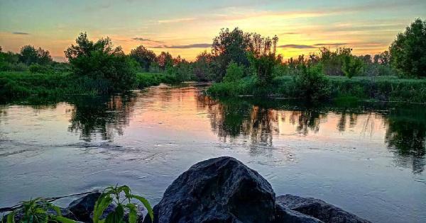 На Украине заявили о массовом отравлении рек. рыбы, водоем, реки, отравление, Украина