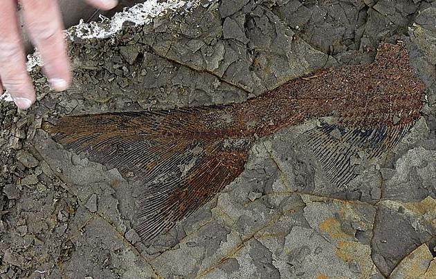 В Северной Дакоте нашли братскую могилу рыб. рыба