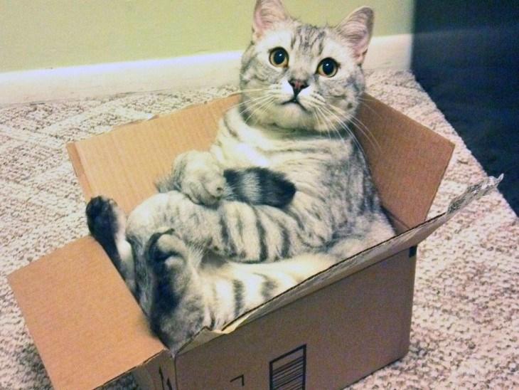 Кота отправили по почте. 14257.jpeg