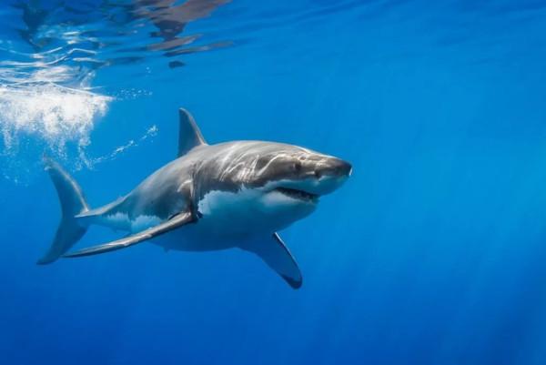 Акула во время рыбалки чуть не откусила руку мальчику. рыбалка, мальчик, акула, США