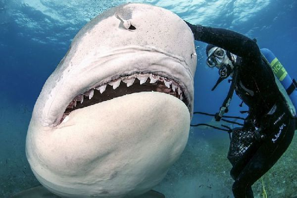 Акула и рыбак подрались из-за рыбы. 14259.jpeg