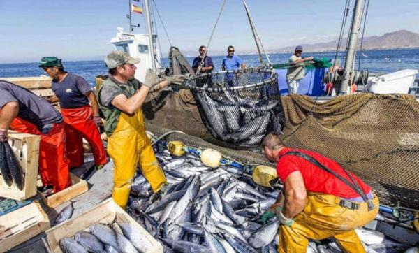 Испанский флот возвращается за рыбой Марокко. рыбы, рыбалка, Испания, Марокко, Евросоюз