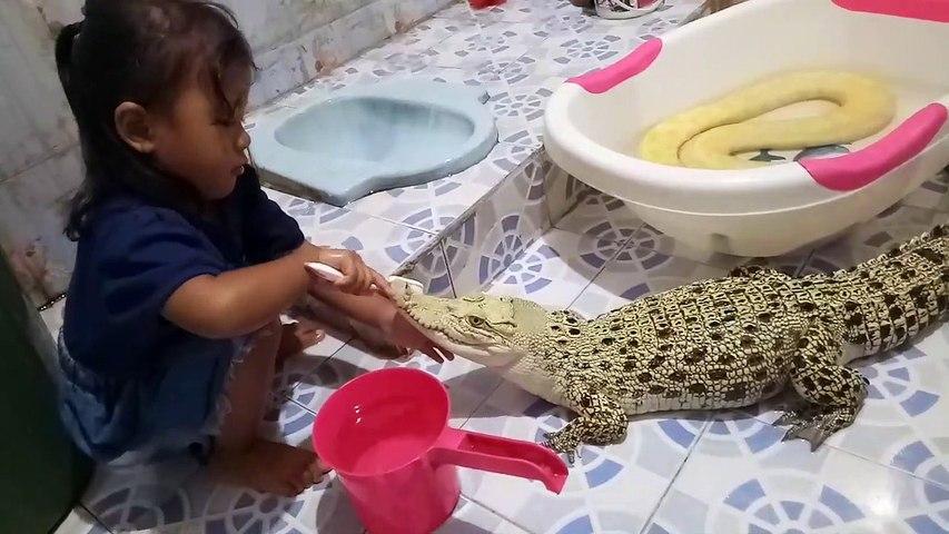 Отец подарил крокодила 3-летней дочери. крокодил