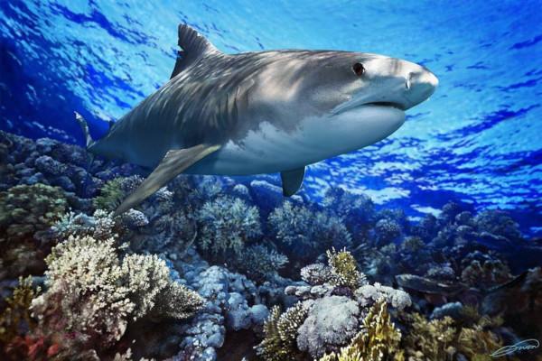 Акула напала на женщину и покусала ее. акула, девушка, Австралия