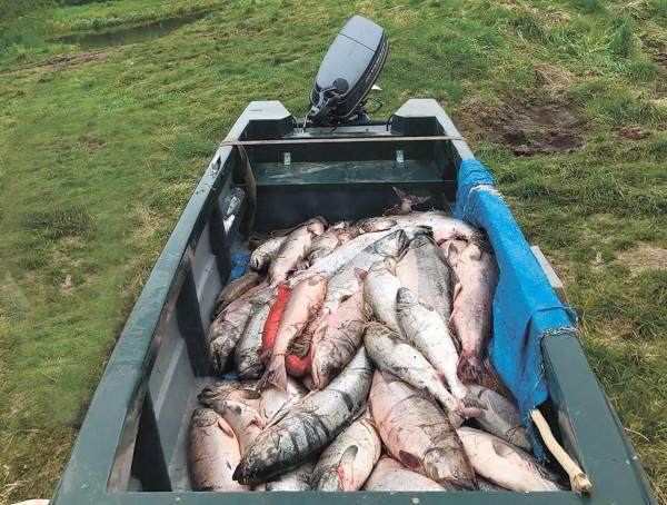 На реках западной Камчатки в минувшие выходные задержаны два браконьера. рыбы, река, браконьеры, Камчатка