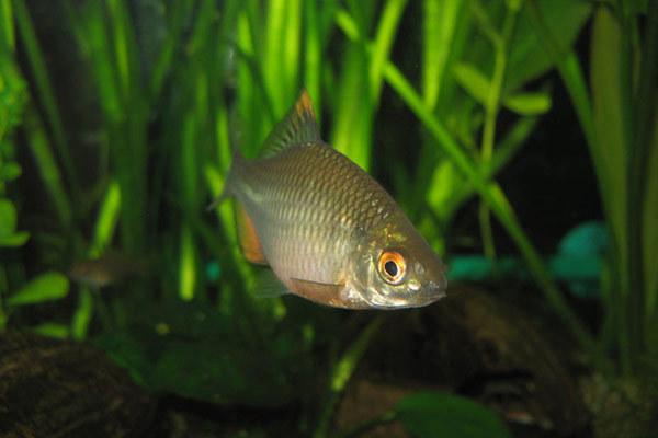 Рыба-симбиот. 14283.jpeg