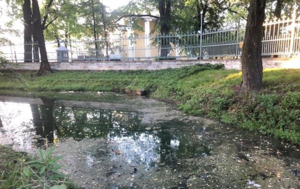 Жители Петербурга пожаловались на гибель уток в прудах Таврического сада. пруд, утки, Таврический сад, Петербург