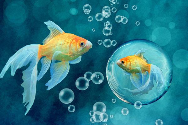 Ученые разгадали главную загадку рыб. 14291.jpeg