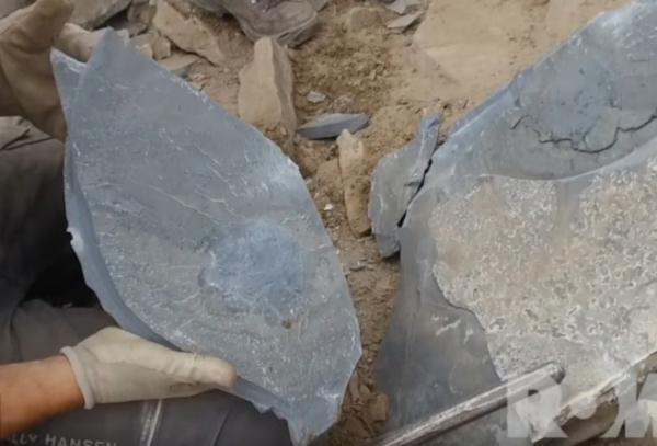 Палеонтологи обнаружили останки