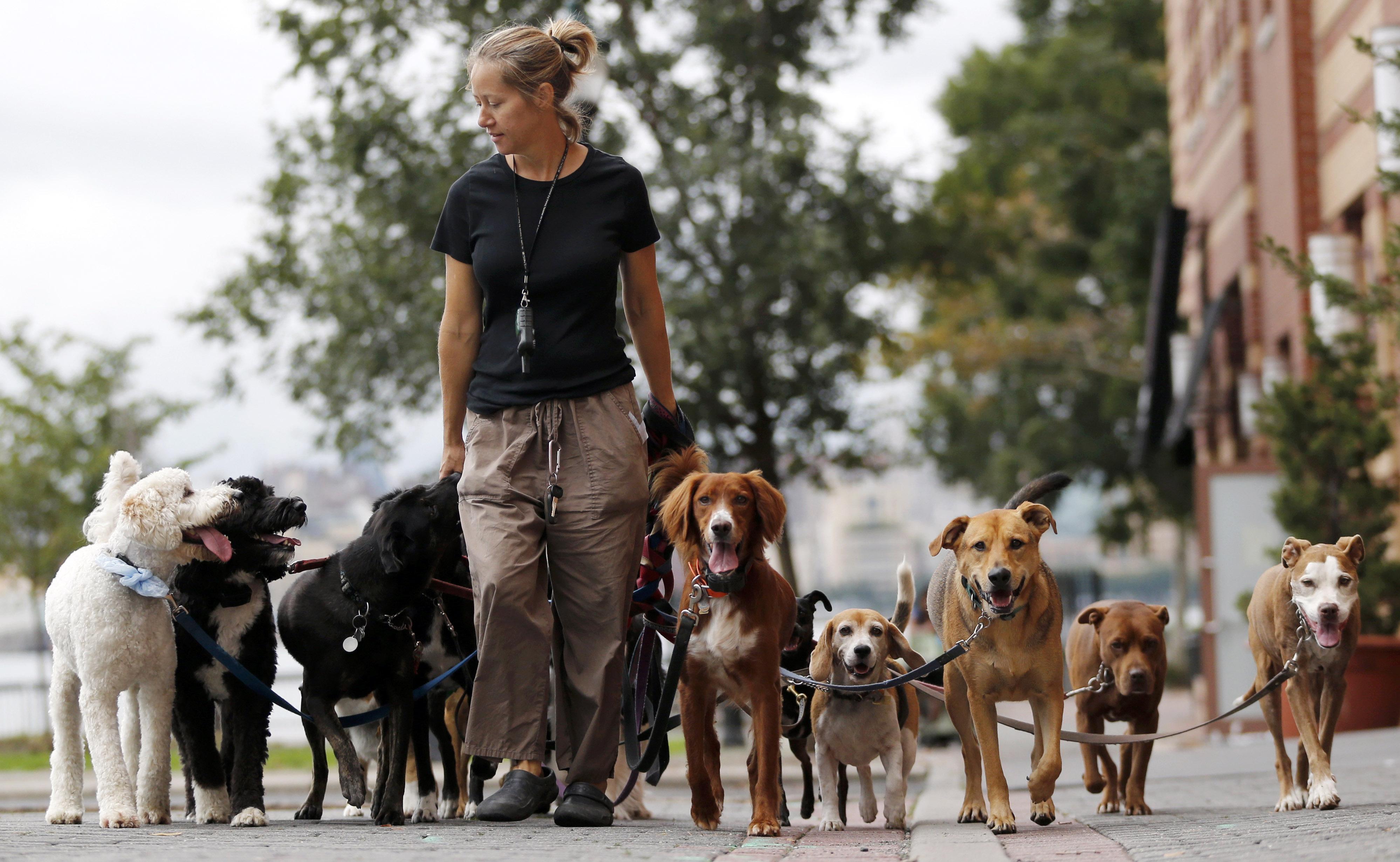 Хозяев собак заставят сдавать экзамены. собаки
