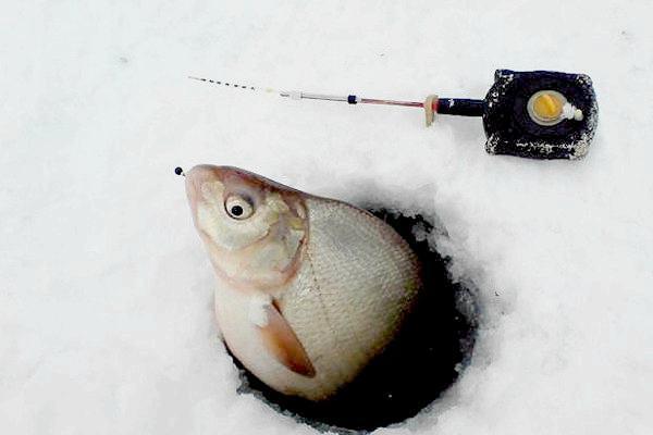 Снасть для засады на рыбу. 14311.jpeg