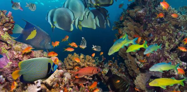 Масштабный вылов заставил рыб эволюционировать быстрее. рыбы, вылов, эволюция