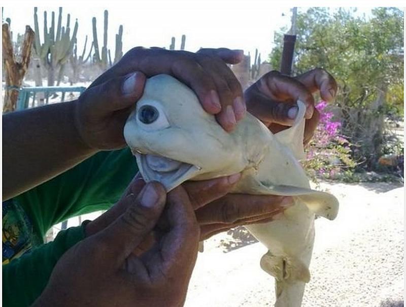 Самые редкие рыбацкие трофеи. 14317.jpeg