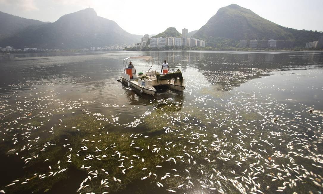 В Родригу-ди-Фрейташ гибнет рыба. 14325.jpeg