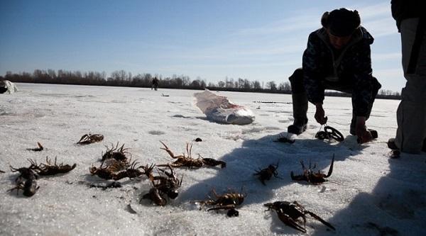 Ловля раков зимой. 15338.jpeg