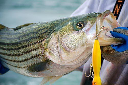 Десять неочевидных советов для рыбалки. 13346.jpeg