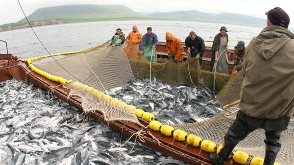 Росрыболовство планирует ввести патенты на вылов рыбы для малого бизнеса. рыба, рыбалка, Росрыболовство, патент, бизнес