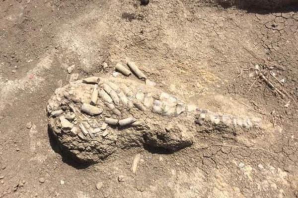 На Керченском полуострове археологи обнаружили останки древнего морского животного. археология, море, животные, морские животные, Керченский пролив