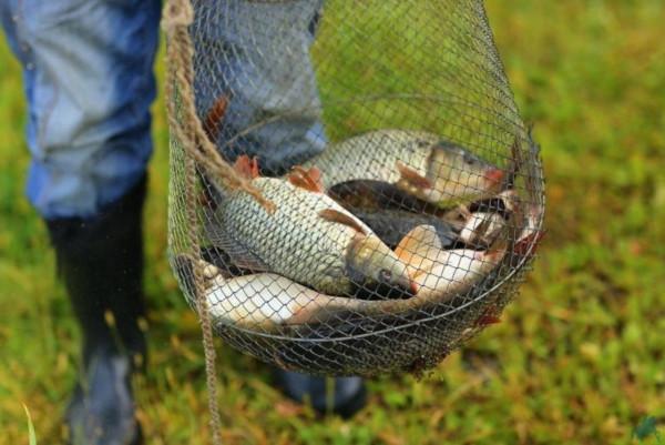 Минсельхоз увеличил нормы вылова для любителей рыбы. рыба, рыбалка, рыболовство, закон