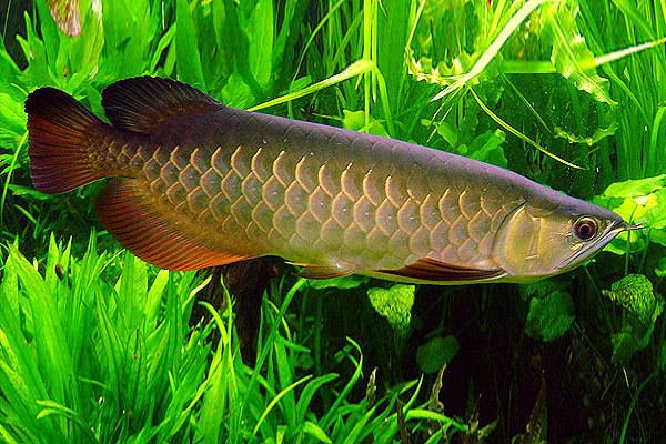 Приморский океанариум приобрел рыб с тремя глазами. 14364.jpeg