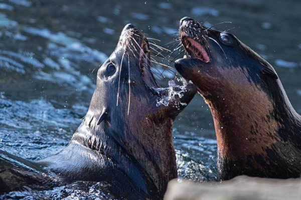 Тюлени напали на рыбака. 14367.jpeg