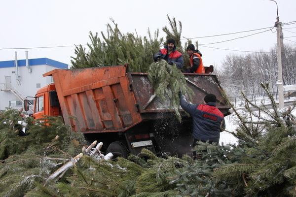 Новогодние елки превратят в удобрения. 14369.jpeg