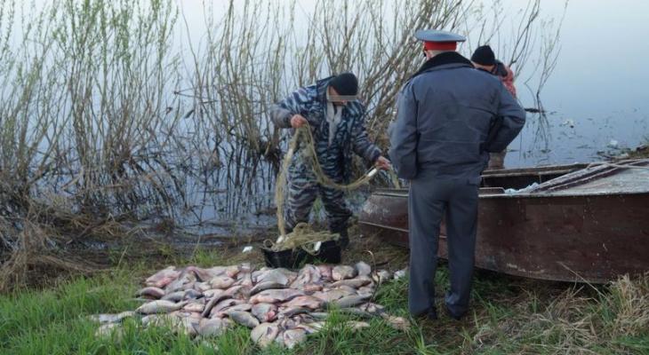 В Краснодарском крае ловили краснокнижную рыбу. браконьеры