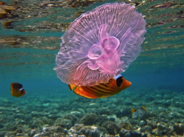 Эпатажный «выпендреж» или проверенная мера: зачем в Австралии надевают колготки во время купания. море, океан, купание, медузы, колготки, Австралия