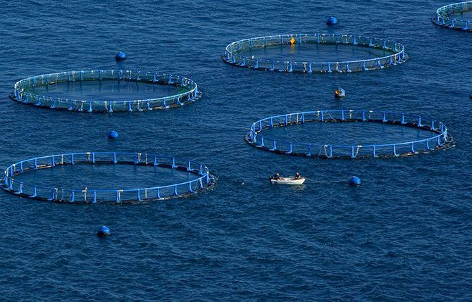 В 2050 году морскую рыбу будут ловить на морских