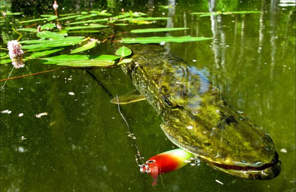 Ученые: Крупная рыба почти полностью исчезла из озер и рек. ученые, реки, озера, рыба, Китай