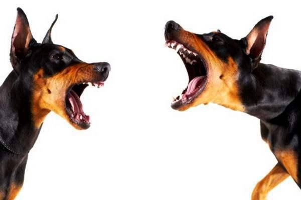 Собакам запретили лаять. 14379.jpeg